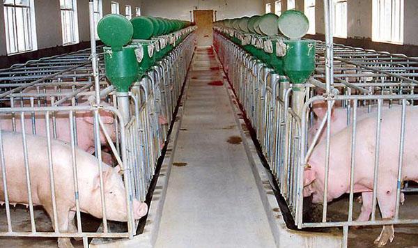 国家发改委下达45.5亿资金支持畜禽养殖场建设,空气能备受推崇